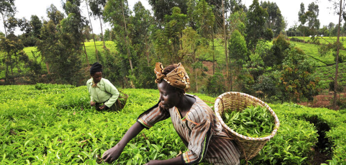 African agriculture sector continues to draw high interest from investors