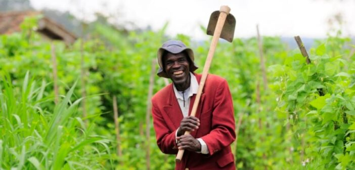 Mixed fortunes for African agribusiness amid pandemic
