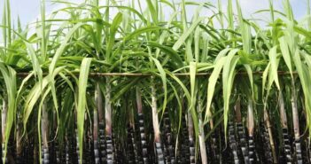 South Africa's sugar industry plans to go into biofuel